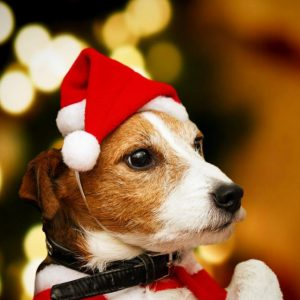 Cute Pet Santa Hat Christmas