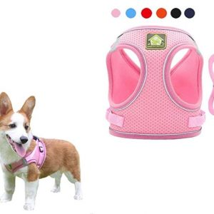Mesh Small Dog Harness And Leash Set