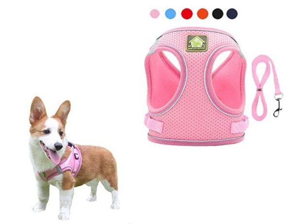 Mesh Small Dog Harness And Leash Set