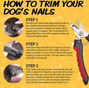 How Do You Cut A Dachshund's Nails?