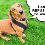 How To Train A Dog To Walk On A Leash?