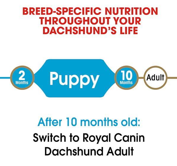 Royal Canin Dachshund Puppy Dry Dog Food