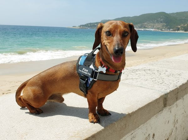 Finn The Sausage Dog   Clothes & Accessories   Online Shop