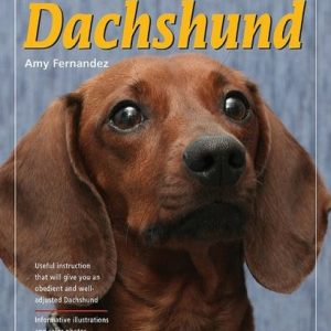 Training Your Dachshund Dog