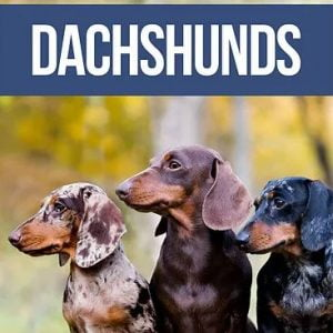 The Complete Guide to Dachshunds