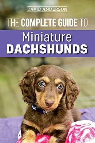 The Complete Guide to Miniature Dachshunds